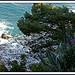 Rivage de Rayol par myvalleylil1 - Rayol Canadel sur Mer 83820 Var Provence France