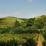 Les ombres et le vert - Sanary-sur-Mer par Charlottess - Sanary-sur-Mer 83110 Var Provence France