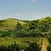 Les ombres et le vert - Sanary-sur-Mer by Charlottess - Sanary-sur-Mer 83110 Var Provence France