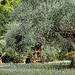 Les oliviers - Sanary-sur-Mer by Vero7506 - Sanary-sur-Mer 83110 Var Provence France