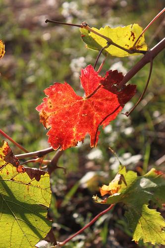 Un automne en Provence by Vero7506