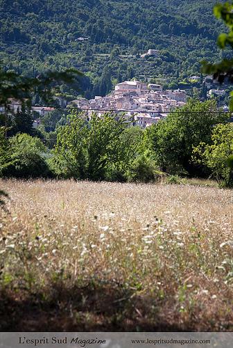 Les abords du village de Seillans, Provence by Belles Images by Sandra A.