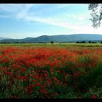 Coquelicots - Montagne Sainte-Baume par Patchok34 - Seillons Source d'Argens 83470 Var Provence France