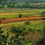 Couleur des Vignes d'automne - Seillons par Charlottess - Seillons Source d'Argens 83470 Var Provence France