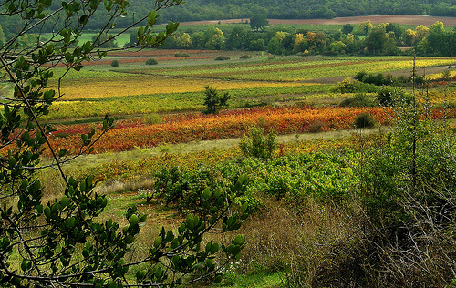 Couleur des Vignes d'automne - Seillons by Charlottess