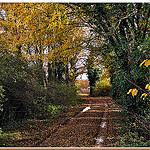 Chemin d'automne, jaune et humide par Charlottess - Seillons Source d'Argens 83470 Var Provence France