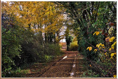 Chemin d'automne, jaune et humide par Charlottess