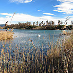 Cygne sur l'Etang de Villepey derrire Saint Aygulf by  - St. Aygulf 83370 Var Provence France