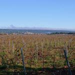 Vignes et au loin Saint-Maximin la Sainte Baume par philippe gastardi - St. Maximin la Ste. Baume 83470 Var Provence France