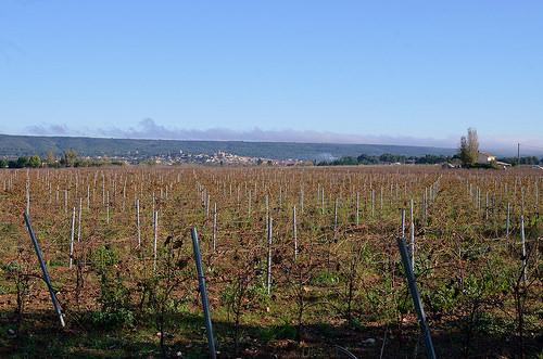 Vignes et au loin Saint-Maximin la Sainte Baume par philippe gastardi