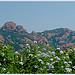 Pic du Cap Roux by .Sissi - St. Raphael 83700 Var Provence France
