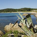 Plage des Salins - St Tropez by  - St. Tropez 83990 Var Provence France