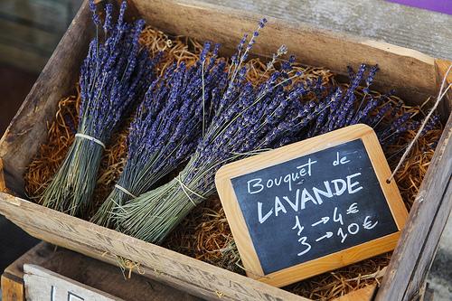 Bouquet de Lavande - Avignon Lavender par 6835