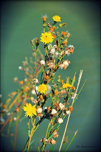 Fleurs jaunes by Dor Ka
