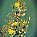 Fleurs jaunes par Dor Ka - Beaumes de Venise 84190 Vaucluse Provence France