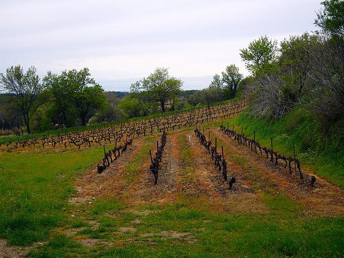 Vignes adaptées à la pente (en hiver) par fgenoher