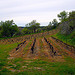 Vignes adaptées à la pente (en hiver) par fgenoher - Beaumes de Venise 84190 Vaucluse Provence France