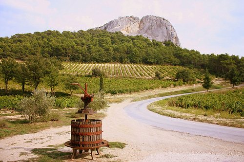 Beaumes de venise vineyards beaumes de venise vaucluse we love provence - Office de tourisme beaumes de venise ...