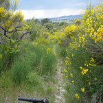 Randonnée à Vélo au milieu des genets by gab113 - Bédoin 84410 Vaucluse Provence France