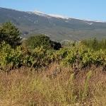 Le Mont Ventoux vu de Bédoin by voyageur85 - Bédoin 84410 Vaucluse Provence France