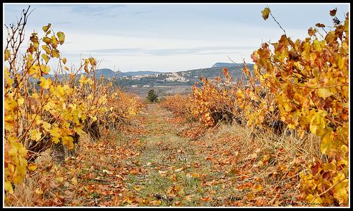 Entre 2 rangées de vigne : le Village du Barroux by Photo-Provence-Passion