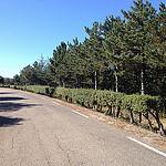 D942 route touristique bordée de buix par gab113 - Blauvac 84570 Vaucluse Provence France