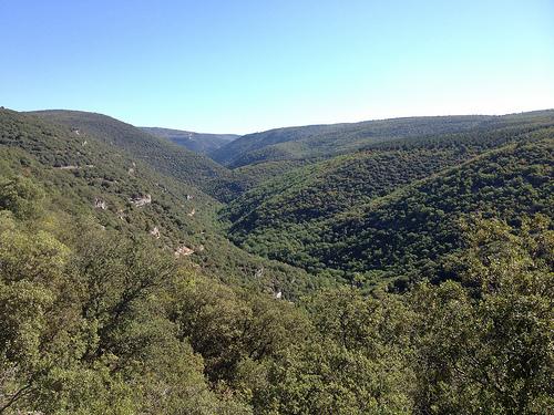 Le désert vert des Gorges de la Nesque par gab113