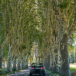 Provence Road Images - Tree Canopy by C.R. Courson - Bonnieux 84480 Vaucluse Provence France