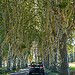 Provence Road Images - Tree Canopy by Toño del Barrio - Bonnieux 84480 Vaucluse Provence France
