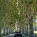 Provence Road Images - Tree Canopy par C.R. Courson - Bonnieux 84480 Vaucluse Provence France