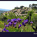 Bonnieux - Printemps dans le Luberon by myvalleylil1 - Bonnieux 84480 Vaucluse Provence France