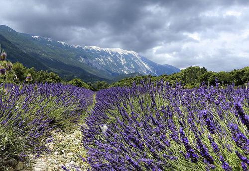 Virée autour du Mont Ventoux. On débute par le versant Nord by mary maa
