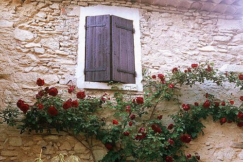 Provence Buoux Auberge Window and Roses par wanderingYew2