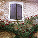 Provence Buoux Auberge Window and Roses by Vital Nature - Buoux 84480 Vaucluse Provence France