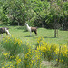 Lamas en Provence by gab113 - Caromb 84330 Vaucluse Provence France