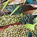 March  Caromb : olives by gab113 - Caromb 84330 Vaucluse Provence France