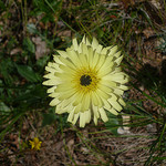 Fleur jaune by gab113 - Caromb 84330 Vaucluse Provence France