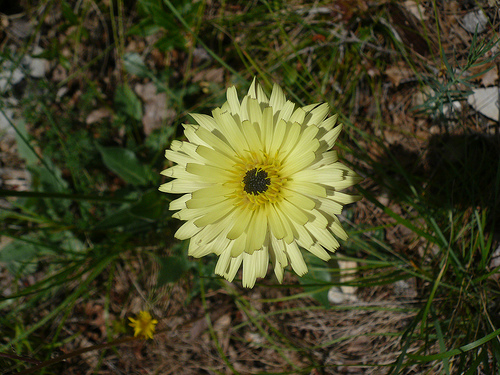 Fleur jaune par gab113