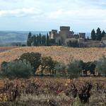 Vignes de Châteauneuf du Pape par Toño del Barrio - Châteauneuf-du-Pape 84230 Vaucluse Provence France