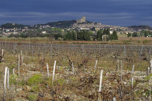 Chateauneuf du Pape - vue sur la ville et les vignes by phildesorg