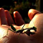 insecte par chloe.ophelia - Cheval Blanc 84460 Vaucluse Provence France