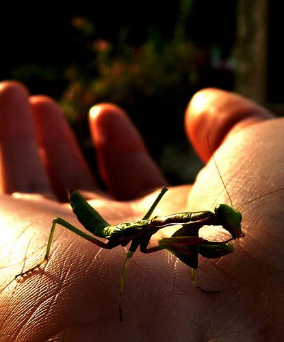 insecte par chloe.ophelia