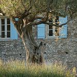 Lumière de Provence by MichaelFFM - Crestet 84110 Vaucluse Provence France