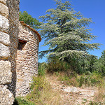 Chapelle et cèdre - Cucuron by Charlottess - Cucuron 84160 Vaucluse Provence France