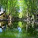 L'étang de Cucuron bordé de platanes par CHRIS230*** - Cucuron 84160 Vaucluse Provence France