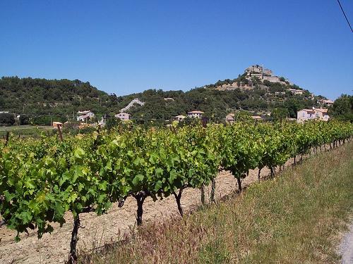 Vineyards close to Entrechaux par Piffer