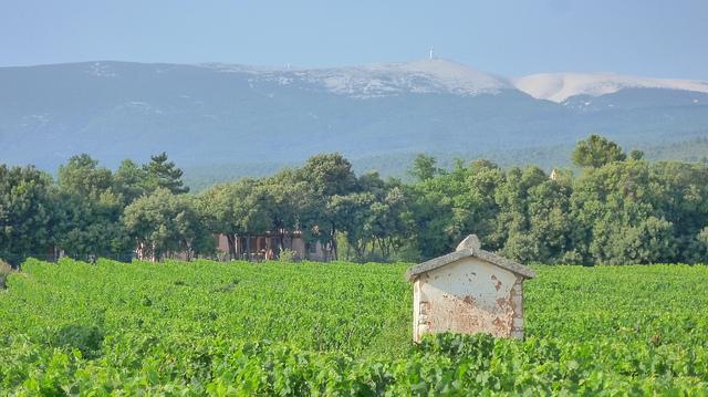 Vigne à Flassan - côte du ventoux (Vaucluse - Flassan) by gab113