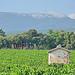 Vigne à Flassan - côte du ventoux par gab113 - Flassan 84410 Vaucluse Provence France