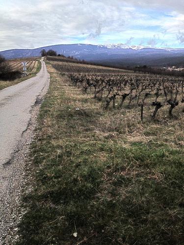Chemin de Saint-peyre à Flassan au pied du Ventoux par gab113