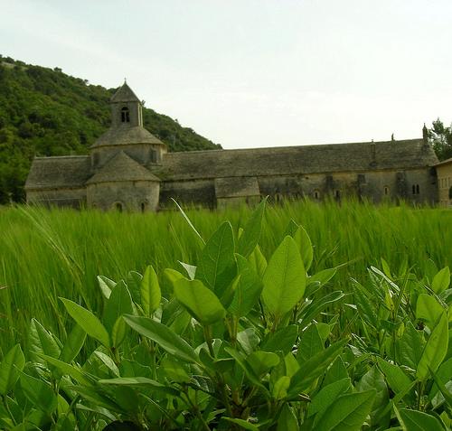 Abbaye de Sénanque  by megaroscio